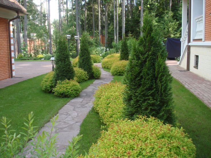Живая изгородь ― Фиттония