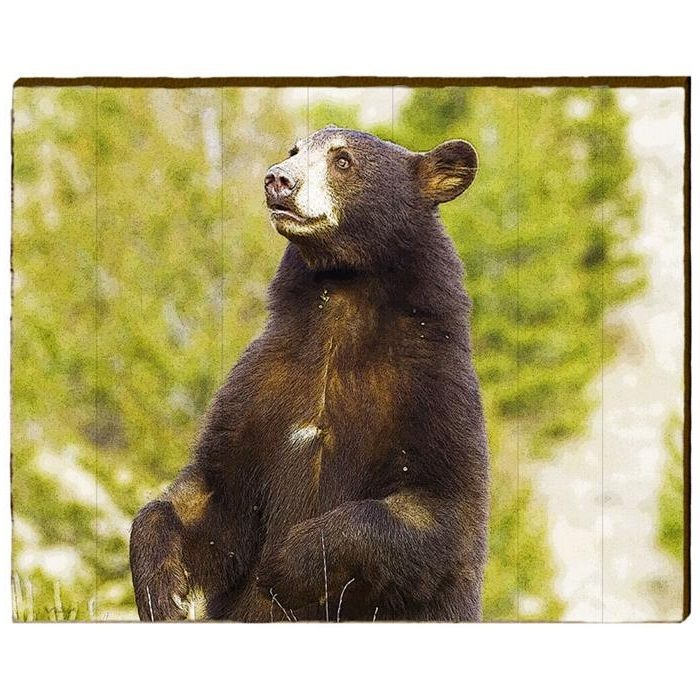 143 best Bear Gifts & Home Decor images on Pinterest | Bear, Bears ...