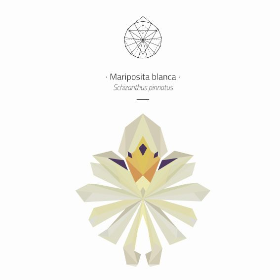 Mariposita Blanca www.mandarinacaiman.com