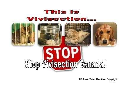 Petition · Prime Minister Justin Trudeau; Minister of Science Kirsty Duncan; Health Minister Jane Philpott: Stop the Pain! Stop Vivisection Canada! · Change.org    https://www.change.org/p/prime-minister-justin-trudeau-minister-of-science-kirsty-duncan-health-minister-jane-philpott-stop-the-pain-stop-vivisection-canada