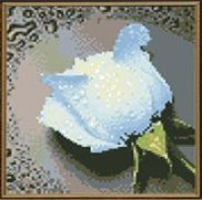 White Rose cross stitch design without a stitch - diamond beading by number kit