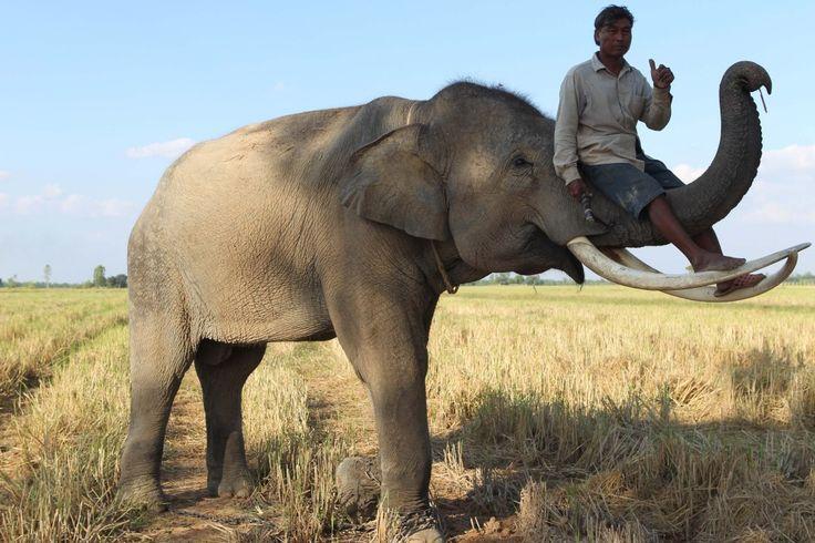 surin elephant village