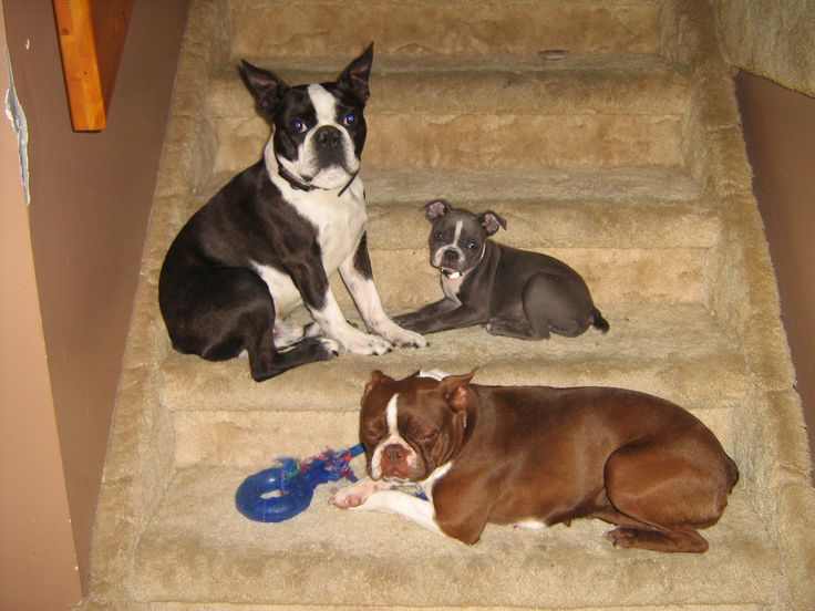 The three musketeers on the stairs.