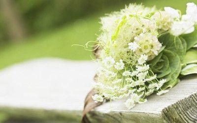 White wildflower bouquet wallpaper