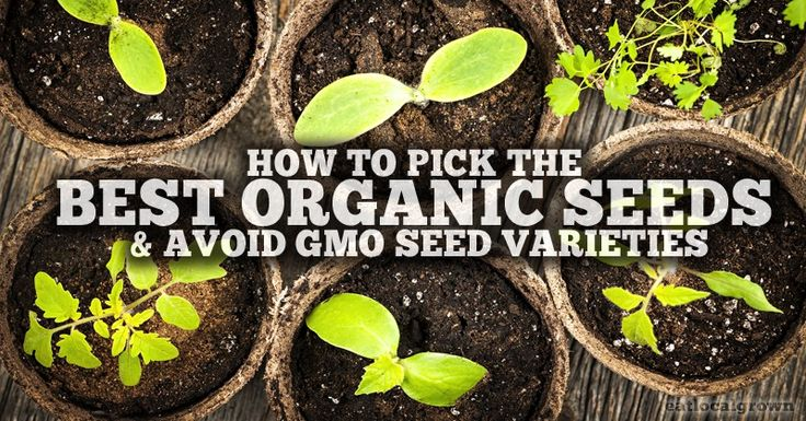 Knowing the difference between organic seeds, heirloom seeds, and GMO seeds is important. Here's a great guide...