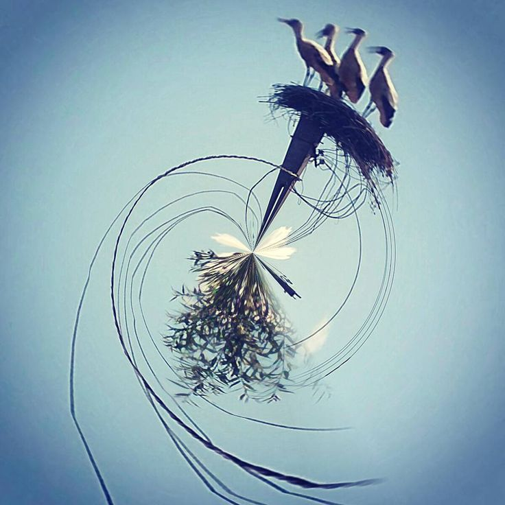 Wings and roots Photo: Diana Topan #stork #fisheye