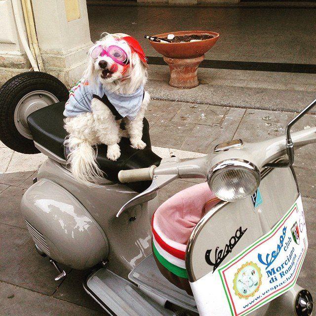 #vespa #piaggio #raduno #appennino #cane #vespista