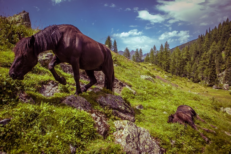 Freedom (Caldenave – Val Campelle)