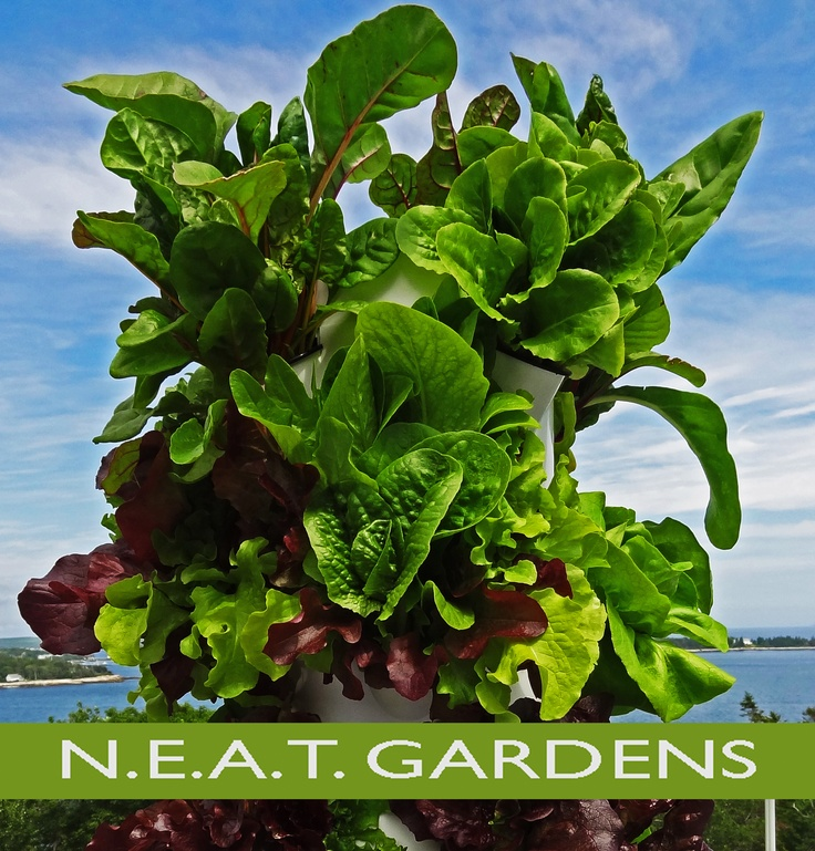 1000+ Images About New England Aeroponic Tower Gardens On