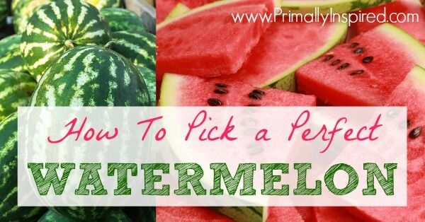 How To Pick A Watermelon :: 1.  Look for the big yellow field spot. 2. Make sure it is heavy. 3. Look for white scars or black dots/ lines. 4. Go for the dull one (NOT shiny). 5. Look for the darkest skin.