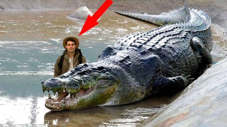 World's Biggest Animal 2015 | Largest Animal | Giant ... World Largest Animal Ever Recorded