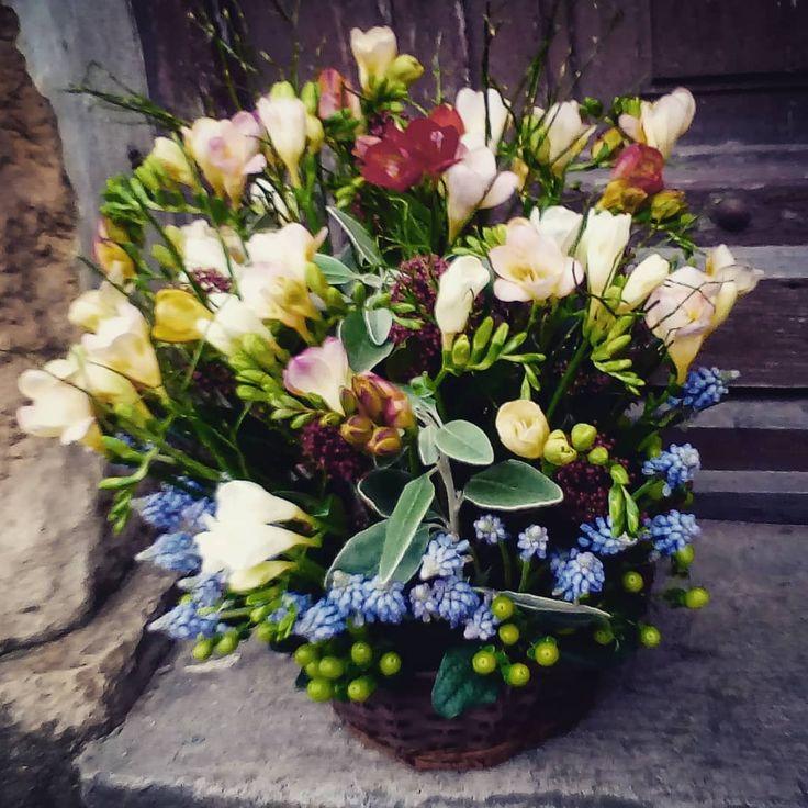 "60 aprecieri, 1 comentarii - Floraria Dorothy's (@florariadorothys) pe Instagram: ""Spring in a basket.. #birthdaygift #cluj #clujnapoca #clujcenter #florariecluj #lifeincluj…"""