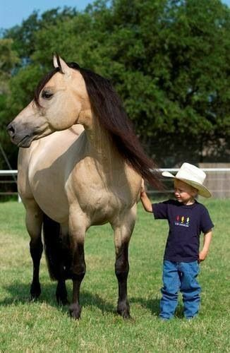 695 Best Images About Buckskin On Pinterest | Horses For ...