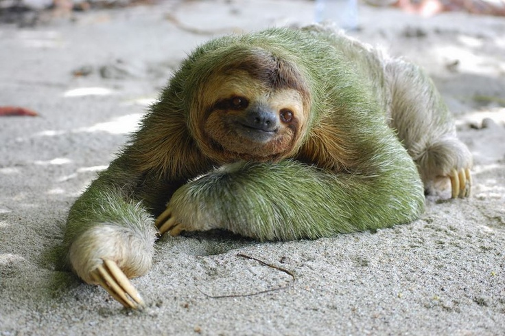 Sloth heading off to look for lust and gluttony.