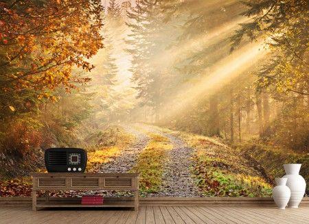 Jesienny Las - Złote liście - fototapeta - 315x232 cm  Gdzie kupić? www.eplakaty.pl