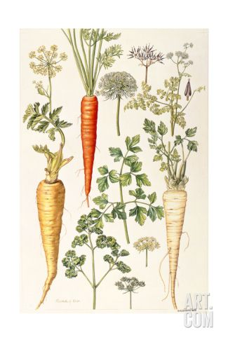 Carrot, Parsnip and Parsley Giclee Print by Elizabeth Rice at Art.com