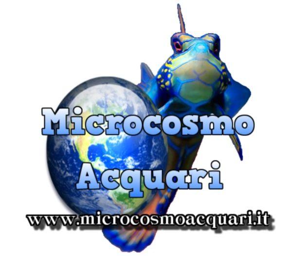 Forum Microcosmo Acquari http://www.microcosmoacquari.it/forum/