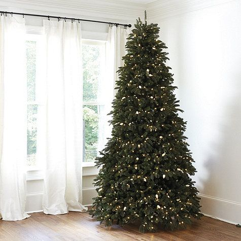 Vintage Light Noble Fir Tree