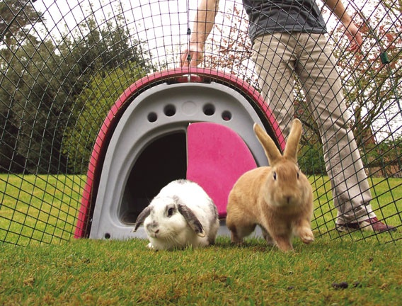 Everything you will need to start keeping rabbits