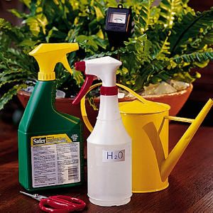 Houseplant survival guideOutdoor Gardens, Houseplants Survival, Gardening Outdoor, Houseplants 101