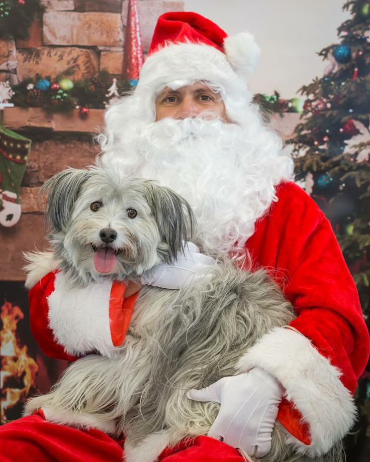 From Adopt-a-Pet: Thank you Petco and our Fargo, ND Petco store for having the Santa Photo fundraiser again this year. We had lots of cool dogs and cats show up to meet Santa and have their photo taken both weekends. Here's one from this weekend!