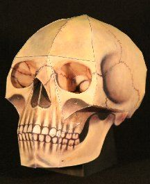 free Human Skull paper model. THE HUMAN SKULL Remember those wonderfull days of childhood? Remember playing with your most favorite toy in the whole world, that battered old skull you found in the attic? Well, now you can relive those joyous bygone days with this Human Skull model! It's life sized and includes that nice antique coloration and empty stare you probably remember so fondly.