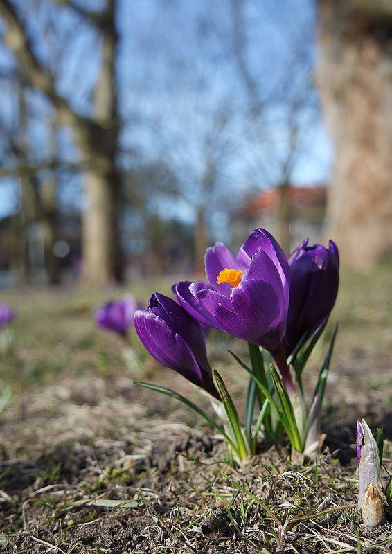 Spring in Szczecin, Poland