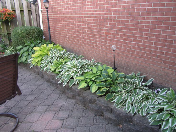 Hosta Bed Front Of The House Maybe Side Yard