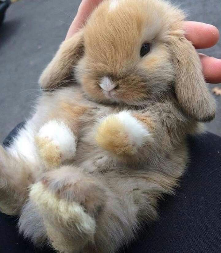 Pin By Little Space On Animais Fofos Lindos Engracados Fluffy Animals Pet Bunny Cute Little Animals