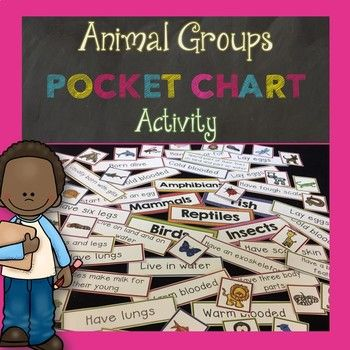 Are you teaching animal groups to your students? This pocket chart sorting activity is a great way for students to review animal groups. This packet includes all six animal groups: *mammals *amphibians *fish *reptiles *birds *insects This pocket chart sorting activity includes headers for