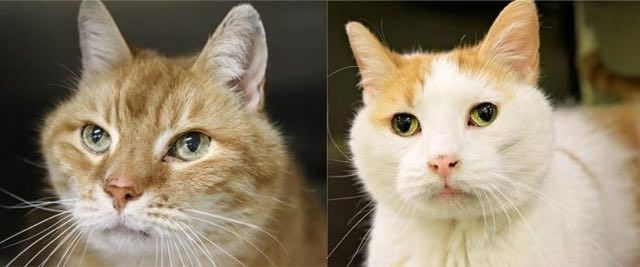 Woman Adopts Senior Cat, Goes Back to Shelter for His Friend | About Family Pets