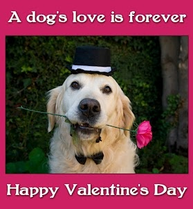 17 best images about pets makes the best valentine s day - Valentines day pictures with puppies ...
