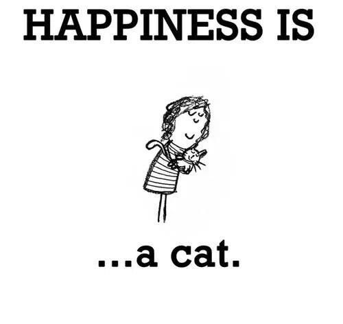Crazy Cat Ladies Unite's post on Cats | Latest updates on Sulia