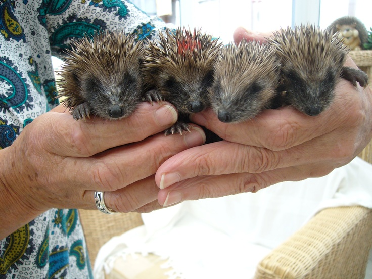 """I took this photo when Joan showed me these babies at her """"Hedgehog Hosprickle"""""""