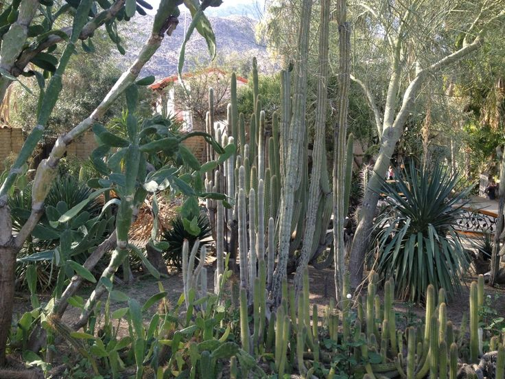 18 Best Palm Springs Images On Pinterest Palm Springs Palm Springs California And Rancho Mirage