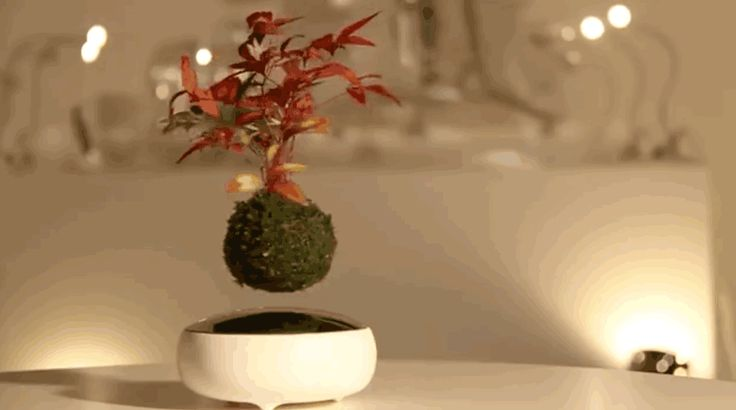 Growing a bonsai tree is an ancient art from Japan. Well now you can add a little bit of modern to this art with this levitating bonsai tree kit. The basic...