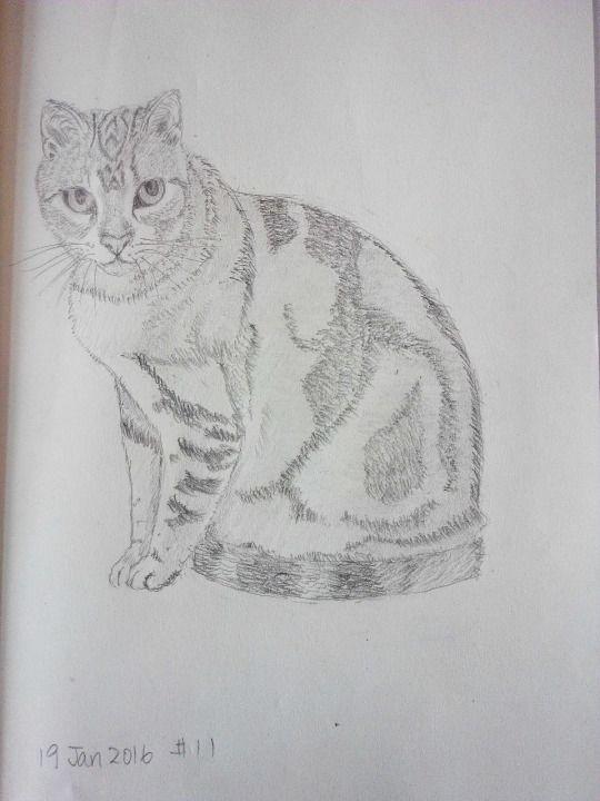 Cat sketching practice #011