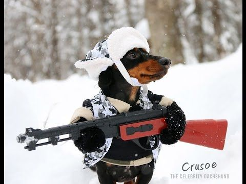 Huntin' Dog Part 2 – WABBIT SEASON – Crusoe Dachshund | 1Funny.com