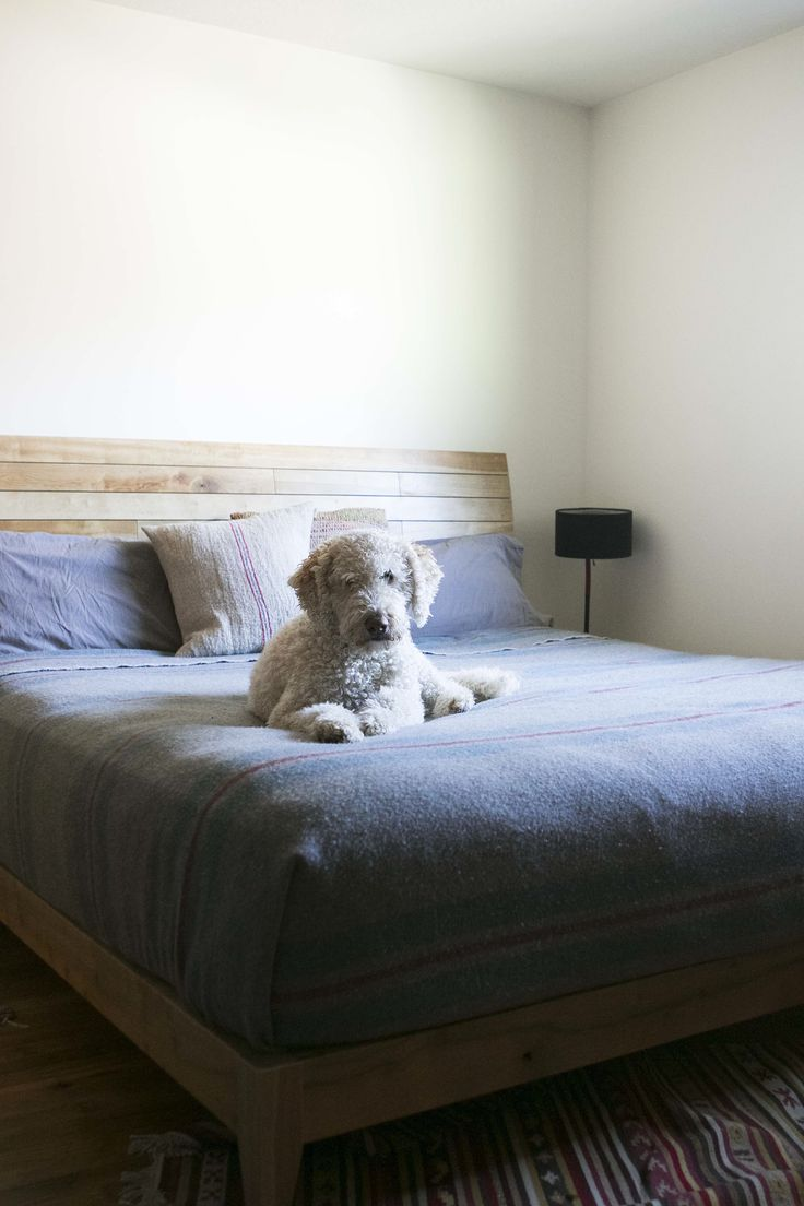 59 best pets on furniture images on pinterest carpentry sofas and