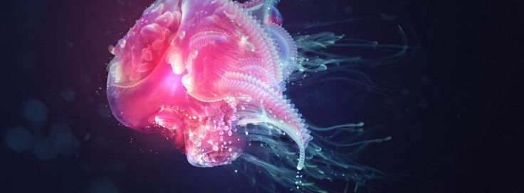 Jellyfish facebook cover