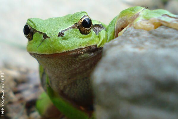 A shocking video of a frog who was skinned, dismembered, and eaten alive at a…