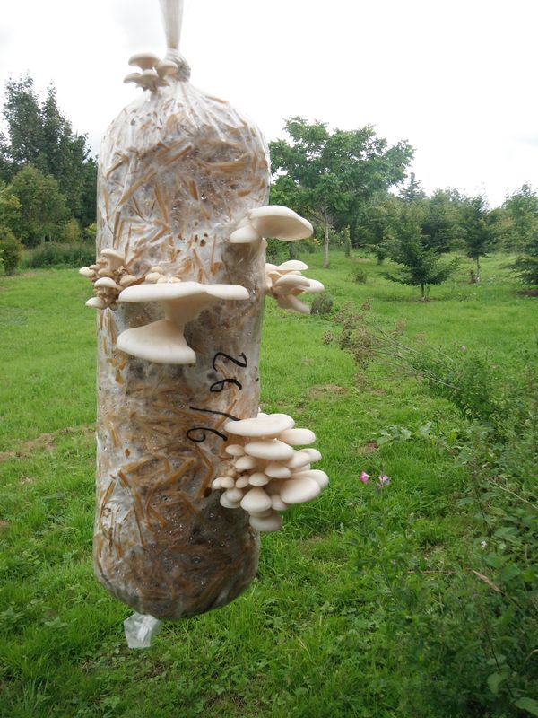 The Cultured Garden - mushroom logs to grow at home #proudtobecurious