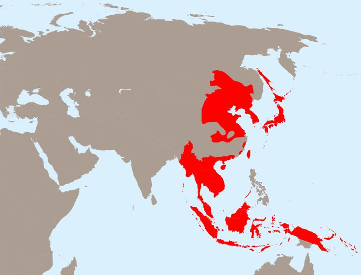 Empire of Japan at its greatest extent in 1942.