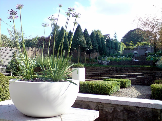 Contemporary planter with agapanthus containers for Contemporary garden planters