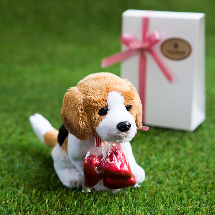 """Delicious premium Haigh's milk chocolate hearts and a Beagle soft toy. Say """"I love you"""" with Haigh's"""
