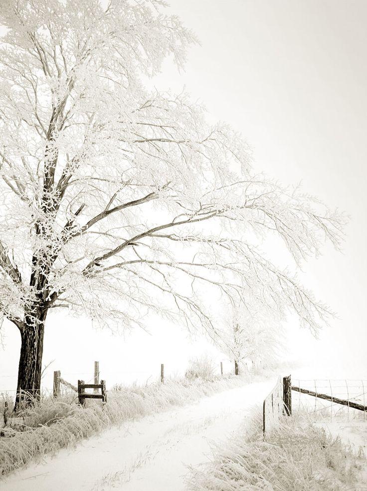 WINTER TREE AND LANE ICE STORM BY JOHN BARTOSIK
