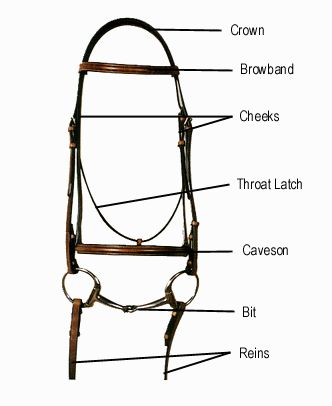 parts of the horse worksheet western and english bridle parts rh pinterest com western horse bridle diagram horse bridle parts diagram