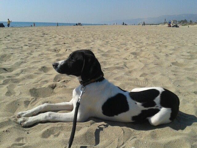 Leo in the beach