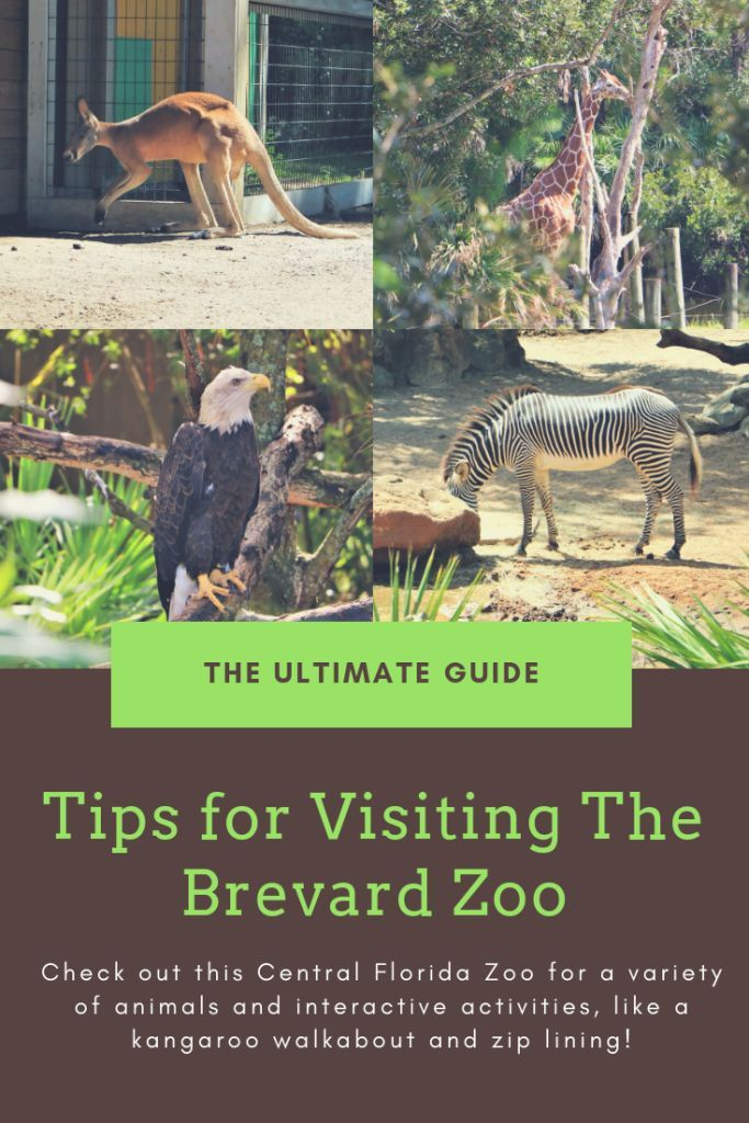 The Brevard Zoo A Melbourne Florida Must See Brevard Zoo Florida Travel Florida Zoo