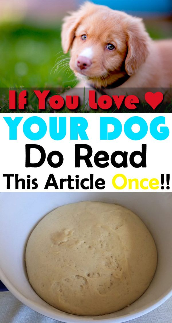 If You Love Your Dog Do Read This Article Once Dangerous